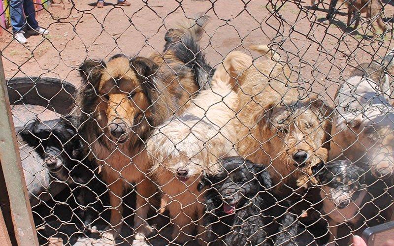 Cusco-Dog-Shelter