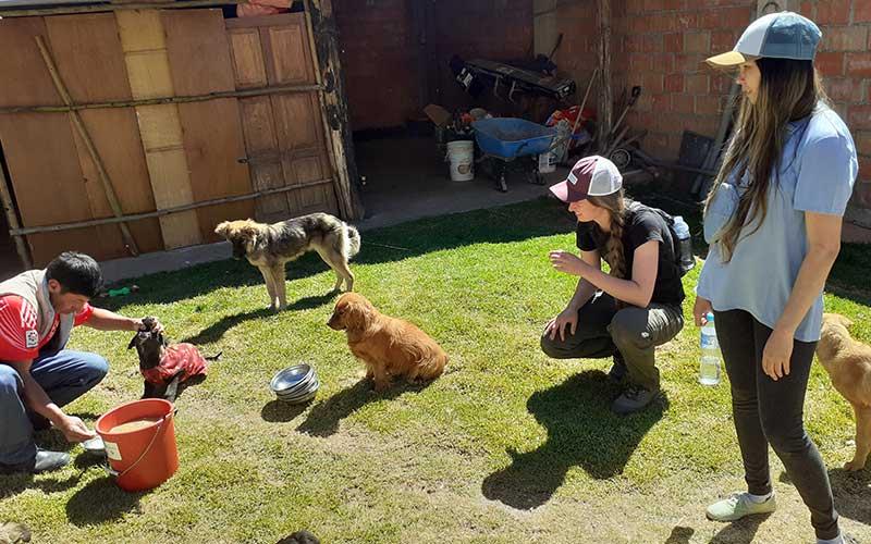 Dog-Shelter-Volunteer-Guatemala
