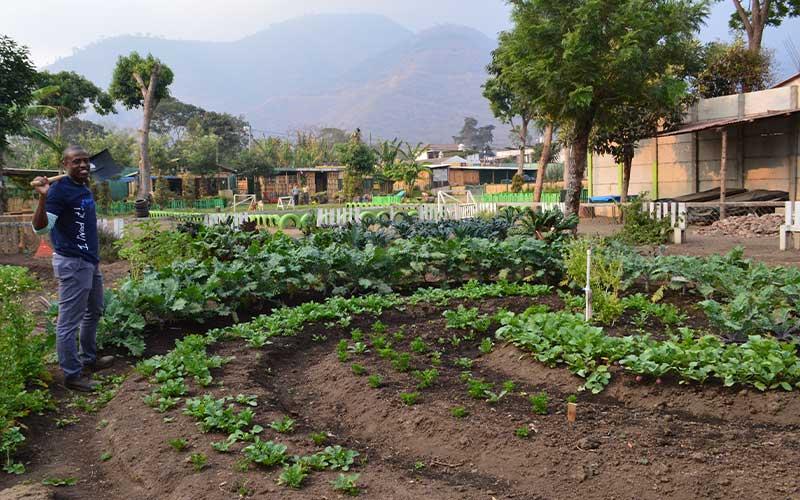 Eco-Agriculture-Volunteer-Guatemala