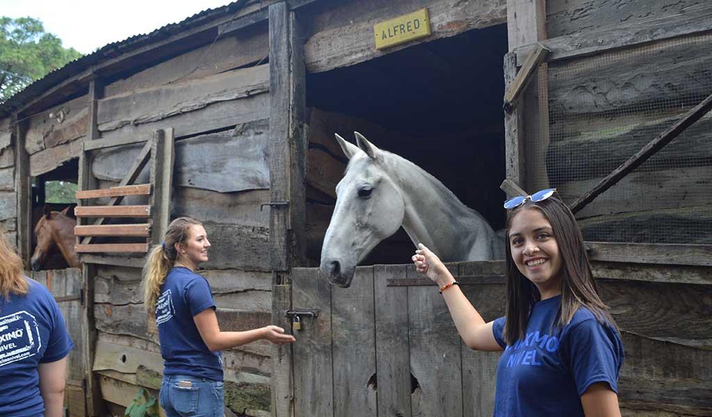 Horse-Rehabilitation-Guatemala