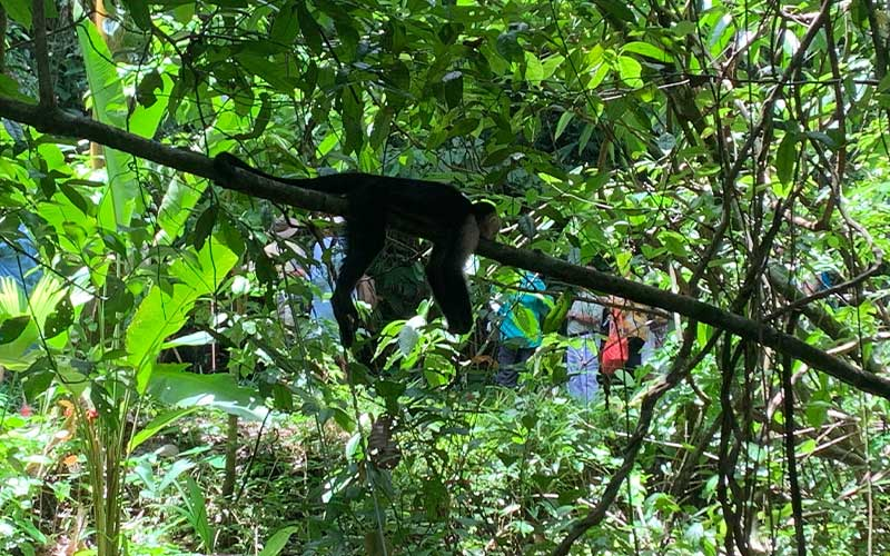 Monkeys-at-Manuel-Antonio-Park