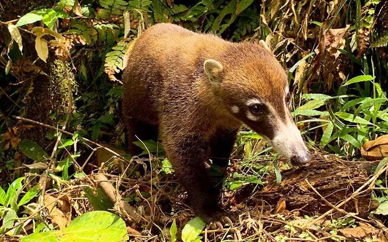 Rio Celeste Nature and Wildlife