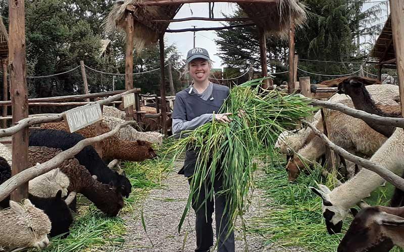 Veterinary-Alpaca-Volunteer-Project