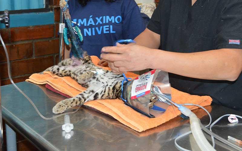 Veterinary-Exotic-Animals-Volunteer-Project