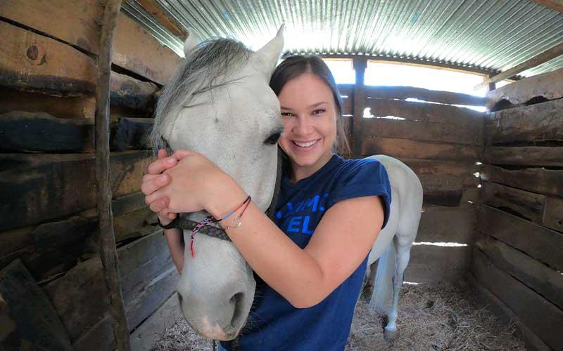 Veterinary-Horses-Volunteer-Project