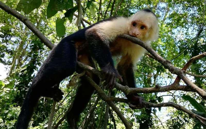 Veterinary-Science-Costa-Rica
