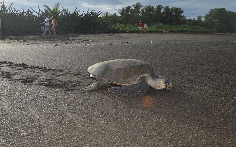 Veterinary-Sea-Turtle-Volunteer-Project