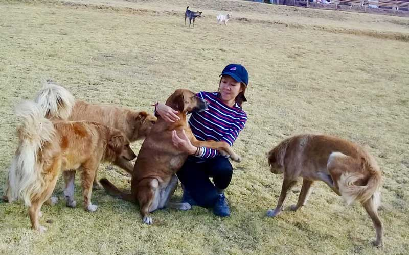 Volunteering-at-a-dog-shelter-in-Cusco-Peru