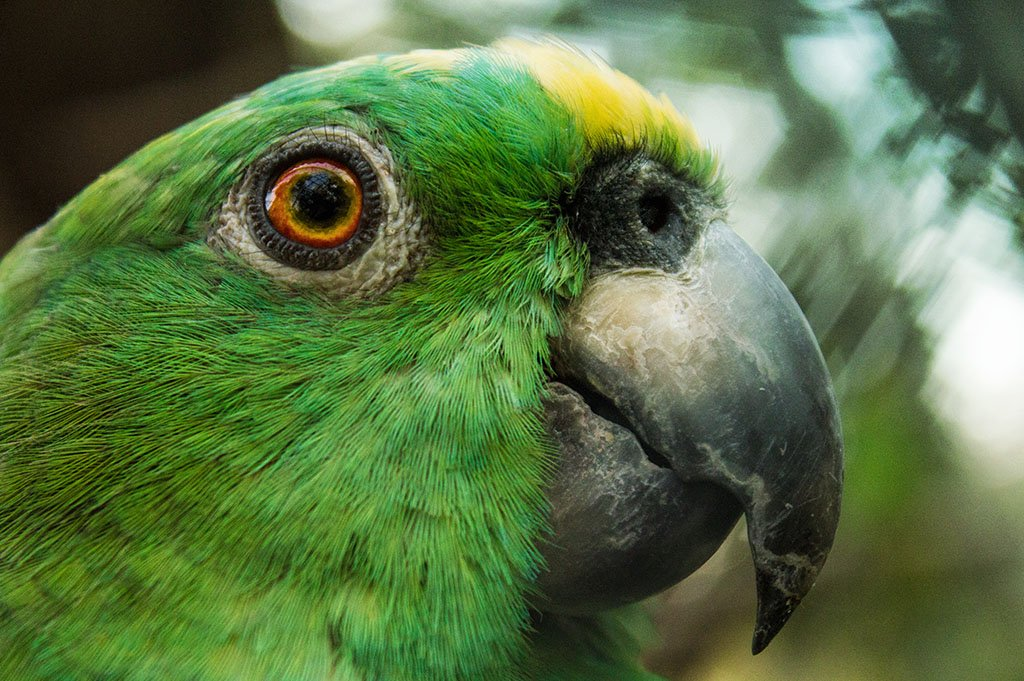 Biology Conservation Techniques of Parrots and Macaws in the Peruvian Amazon