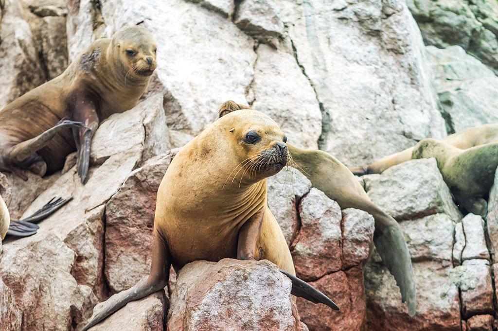Ecology & Conservation of Marine Mammals of the Humboldt Upwelling Ecosystem