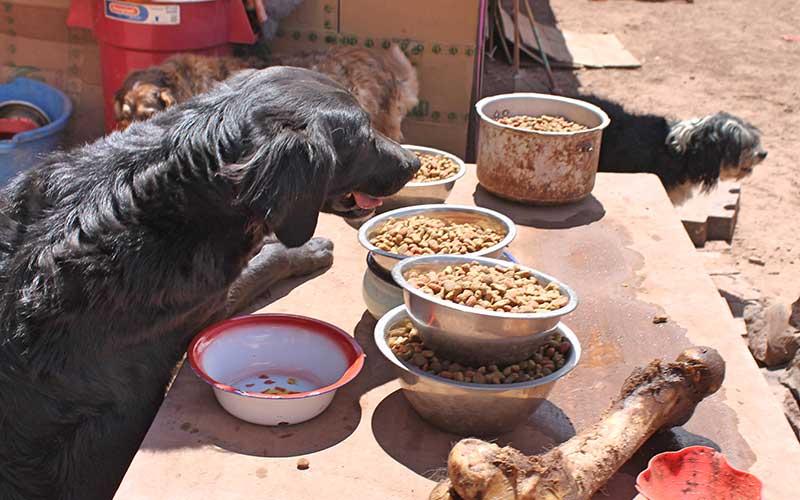 feeding-stray-dogs-in-peru