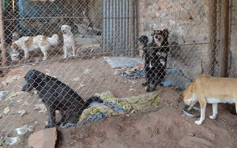 kennels-for-stray-dogs-cusco