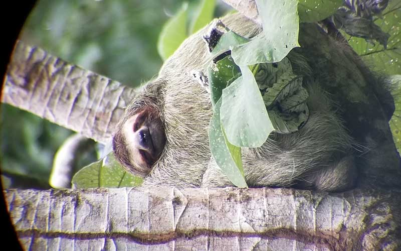 sloths-while-volunteering-in-costa-rica