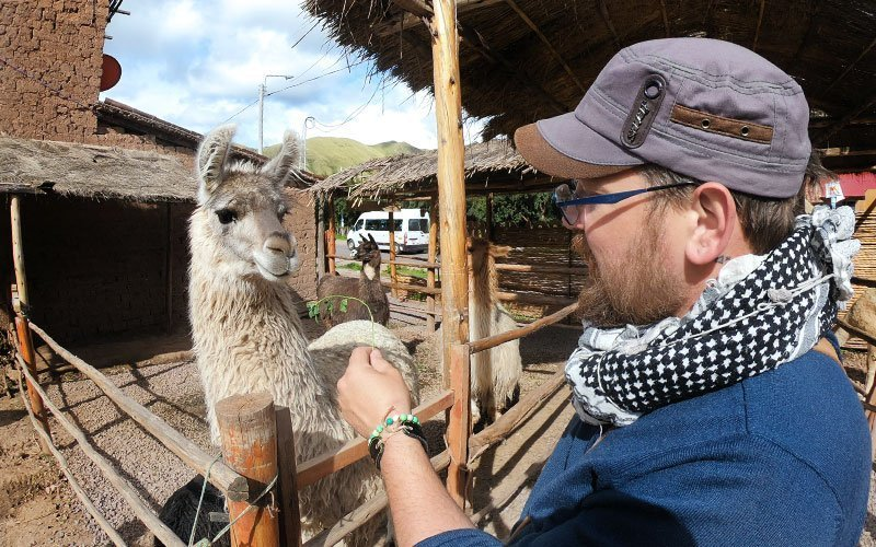 Volunteer with Alpacas in Peru