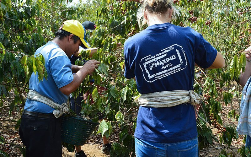 Volunteer in Organic Coffee Farms in Costa Rica
