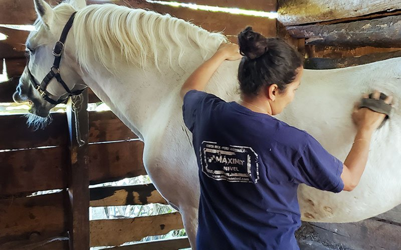 Volunteer With Horses Abroad