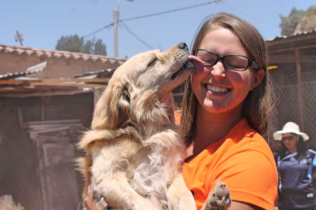 volunteer at dog shelters abroad